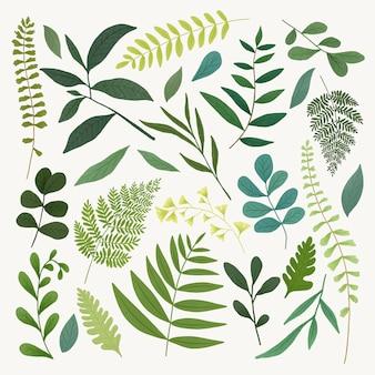 Set di foglie verdi