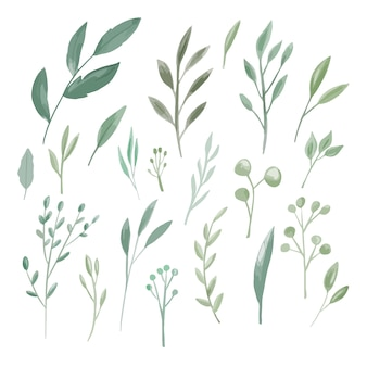 Decorazione della raccolta dell'insieme grande dell'acquerello delle foglie verdi per l'invito di nozze