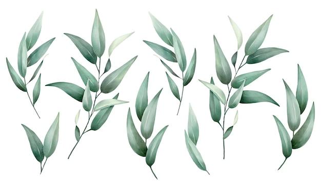 Set di acquerelli di foglie verdi disegno vettoriale disegnato a mano di alta qualità