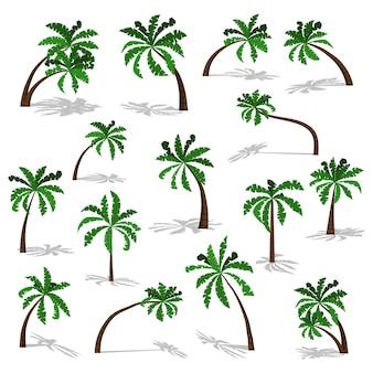 Palme verdi con ombra isolata su sfondo bianco.