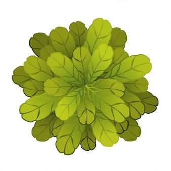 Una pianta o un albero verde, vista dall'alto. illustrazione, su bianco.