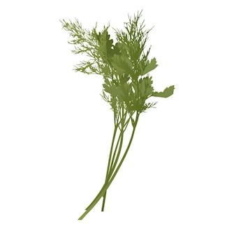 Il prezzemolo crudo verde e il mazzo di aneto fresco spice ingredient