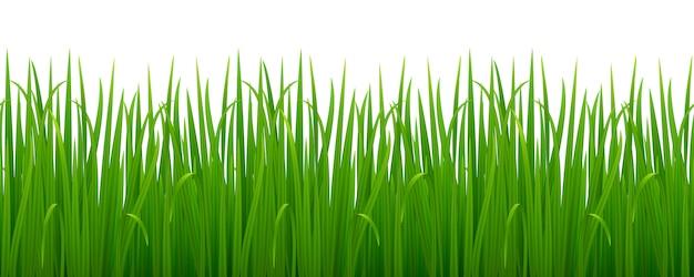 Erba verde realistica
