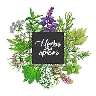 Design quadrato verde con spezie ed erbe aromatiche