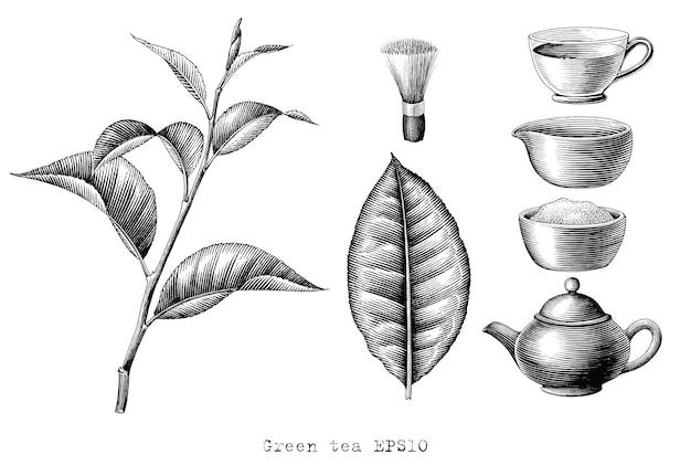 Collezione di tè verde mano disegno incisione stile clipart in bianco e nero su bianco