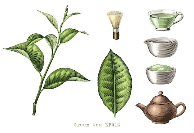 Tè verde collezione mano disegno incisione stile clipart su bianco