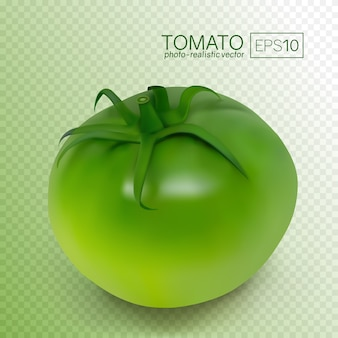 Pomodoro verde non maturo su sfondo bianco. illustrazione vettoriale fotorealistica. questi pomodori possono essere posizionati su qualsiasi sfondo.