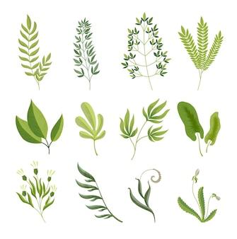 Rami verdi. foglie di raccolta di piante esotiche