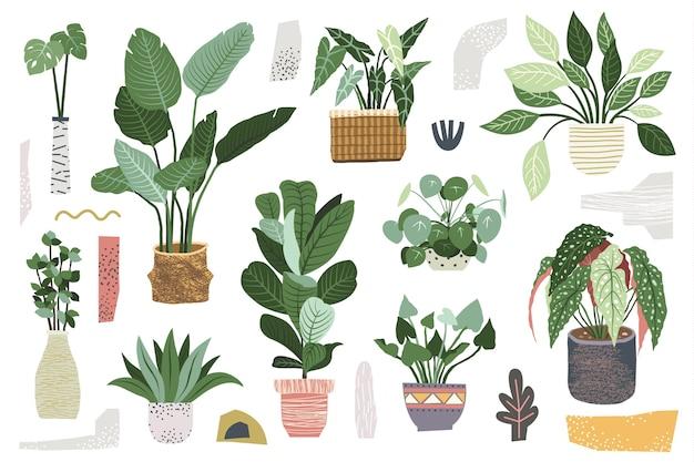 Collezione di piante da interni verdi