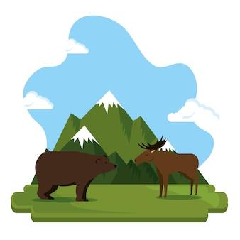Orso grizzly e scena alce canadese