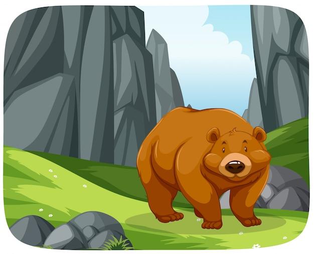 Un orso grizzly nella scena della natura
