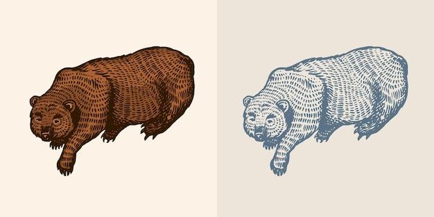 Orso grizzly in stile vintage animale selvatico marrone la bestia sta giocando vecchio schizzo inciso disegnato a mano