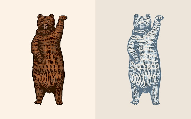 Orso grizzly in stile vintage marrone animale selvatico danzante bestia disegnata a mano inciso vecchio schizzo per