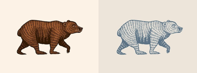 Orso grizzly in stile vintage marrone animale selvatico vista laterale disegnato a mano inciso vecchio schizzo per tshirt