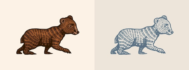 Orsetto grizzly in stile vintage marrone animale selvatico vista laterale disegnato a mano inciso vecchio schizzo per