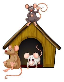 Gruppo di simpatici mouse con casetta isolata su bianco