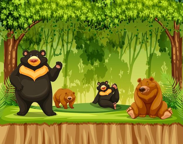 Gruppo di grizzly nella giungla