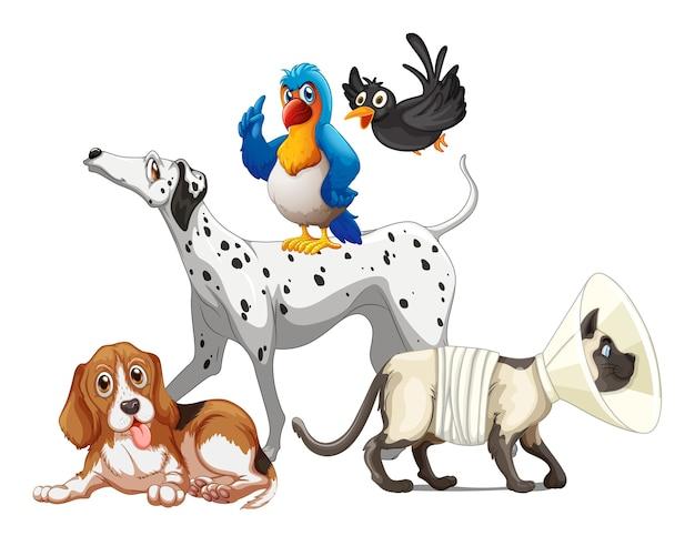 Gruppo di animali domestici su sfondo bianco