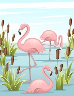 Gruppo di fenicottero rosa in piedi nell'illustrazione del lago d'acqua