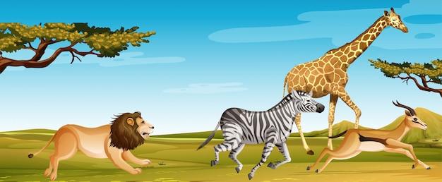 Gruppo di animali africani selvaggi che corrono nel campo della savana