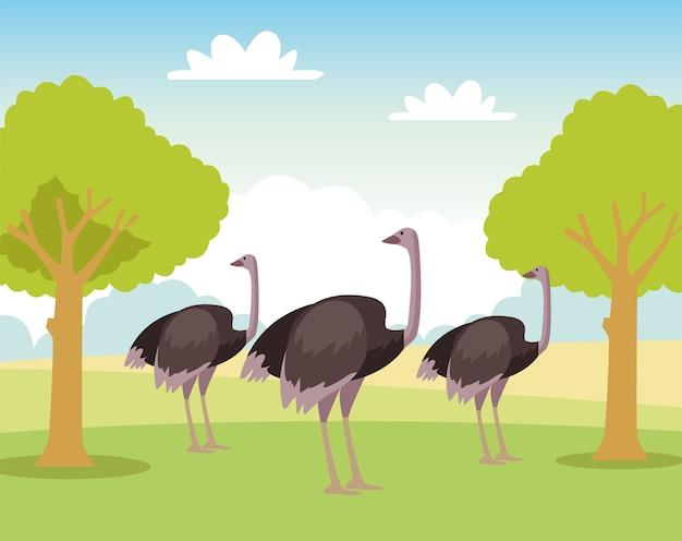 Gruppo di animali selvatici di struzzi nel campo