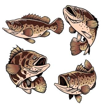 Pesce cernia