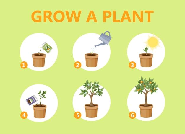 Coltivare una pianta nella guida del vaso. come far crescere un fiore istruzioni passo passo. processo di crescita del germoglio. raccomandazione di giardinaggio. illustrazione vettoriale piatto isolato