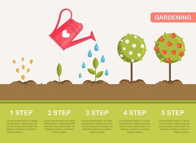 Crescita della pianta nel terreno, dai semi ai frutti