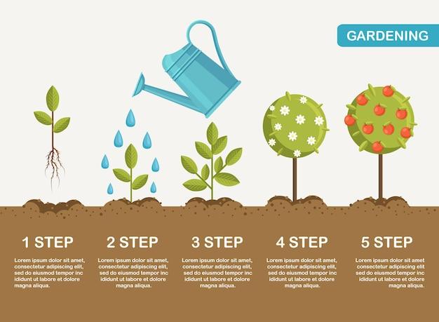 Crescita della pianta nel terreno, dal germoglio all'illustrazione dei frutti