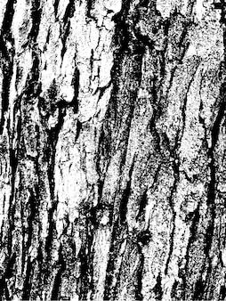 Struttura della corteccia di albero del grunge