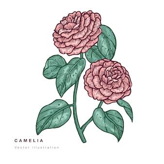 Illustrazione di fiori di camelia di tiraggio della mano. ghirlanda floreale. carta floreale botanica su sfondo bianco.