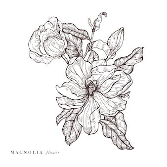Illustrazione di fiori di magnolia di tiraggio della mano. ghirlanda floreale. carta floreale botanica su sfondo bianco.