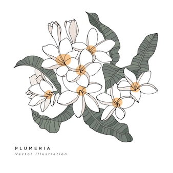 Illustrazione di fiori di plumeria di tiraggio della mano. carta floreale botanica