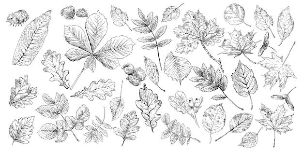 Set di foglie di disegno a mano