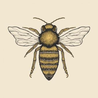 Illustrazione d'ape d'annata del disegno della mano