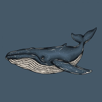 Illustrazione della balena blu d'annata del disegno della mano