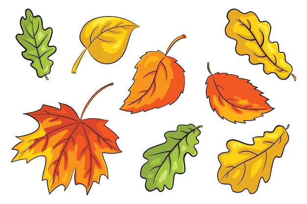 Set di foglie autunnali disegnate a mano. raccolta di fogliame della foresta. foglia di quercia, acero e nocciola. elementi decorativi autunnali per la progettazione e la decorazione di stampe, adesivi, inviti e biglietti di auguri. vettore premium