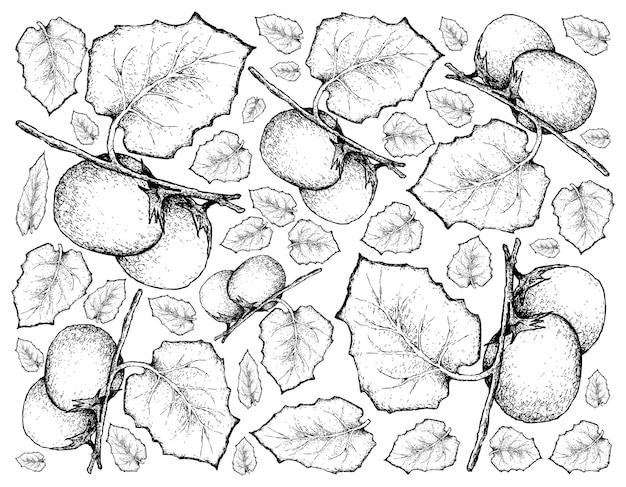 Sfondo disegnato a mano di frutti di cubiu cocona