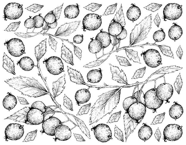 Fondo disegnato a mano dei frutti dell'albero di ortica europea