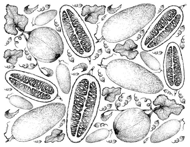 Sfondo disegnato a mano di melone honeydew e cassabanana