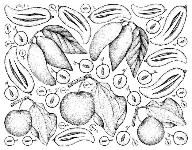 Sfondo disegnato a mano di frutti di giuggiola e madan indiano