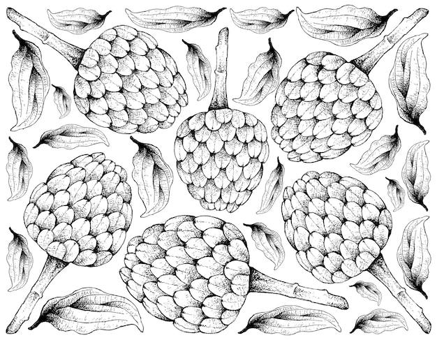 Fondo disegnato a mano di frutti maturi cherimoya