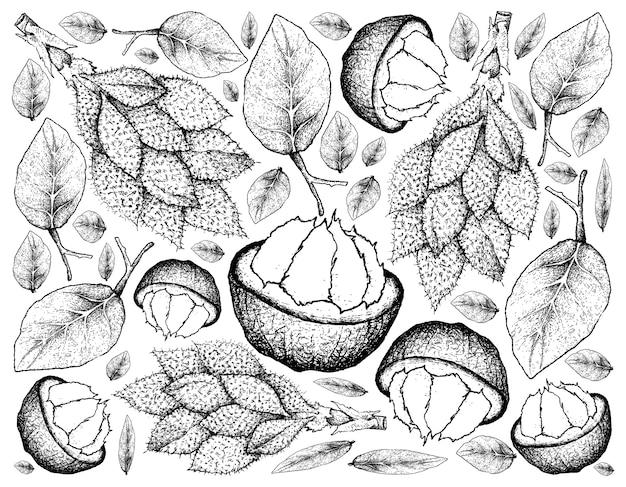 Sfondo disegnato a mano di frutti di santol e luk rakam