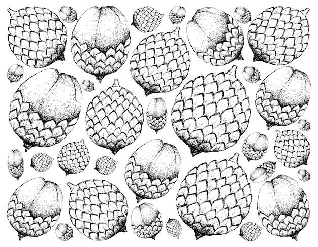 Fondo disegnato a mano di frutta matura dolce santol
