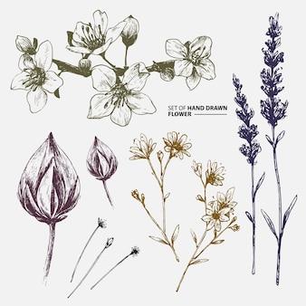 Bello fiore disegnato a mano per lo stile d'annata del fondo del modello di nozze della carta dell'invito