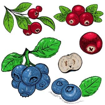 Bacche viola mirtillo disegnato a mano e mirtillo rosso. elemento per poster, carta, banner, menu, decorazione del negozio. immagine