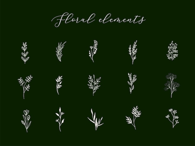 Elementi botanici disegnati a mano in stile lineare alla moda
