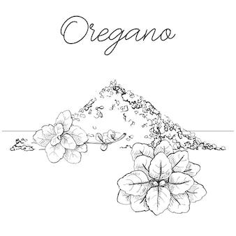 Mazzo di origano disegnato a mano. origano fresco isolato su sfondo bianco. illustrazione di uno stile di schizzo.