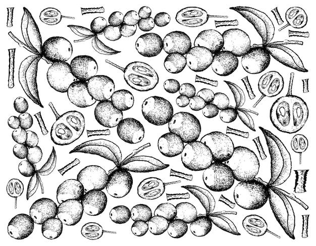 Disegnato a mano di llustration di frutti di camu camu