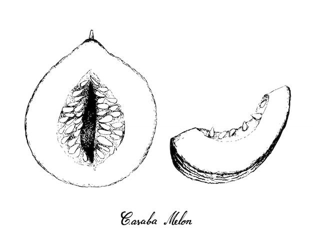 Disegnato a mano di melone casaba su sfondo bianco
